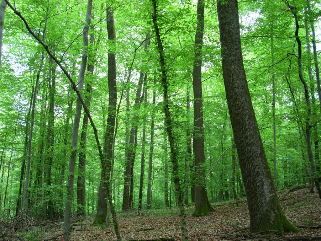 ドイツの森林