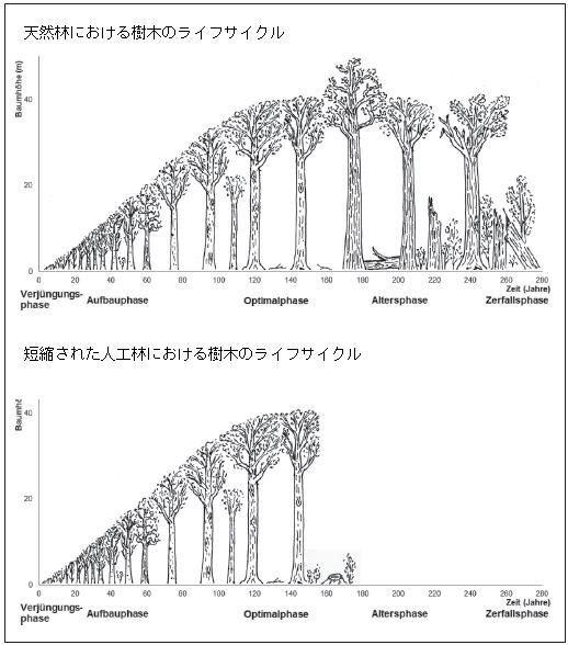 林分の発達段階