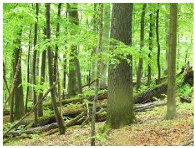 近自然的な森林
